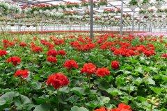 schaefers-gardens-openhouse-042812-geraldineclark-(12).jpg