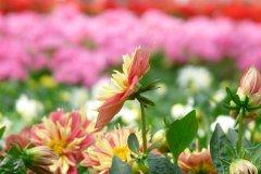 schaefers-gardens-openhouse-042812-geraldineclark-(14).jpg