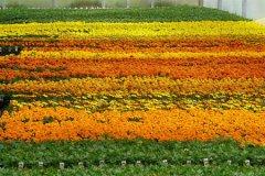 schaefers-gardens-openhouse-042812-geraldineclark-(16).jpg